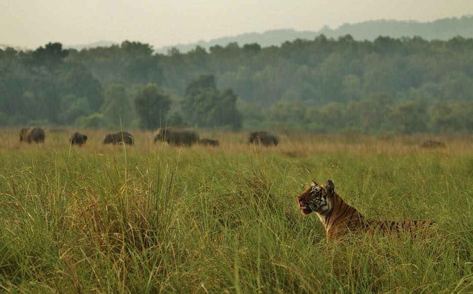 rajaji national park package